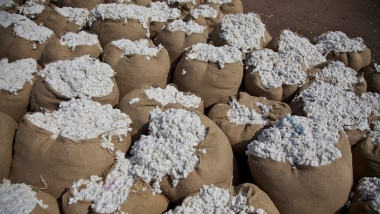 Tanzanian Cotton - The Benefits of Contract Farming