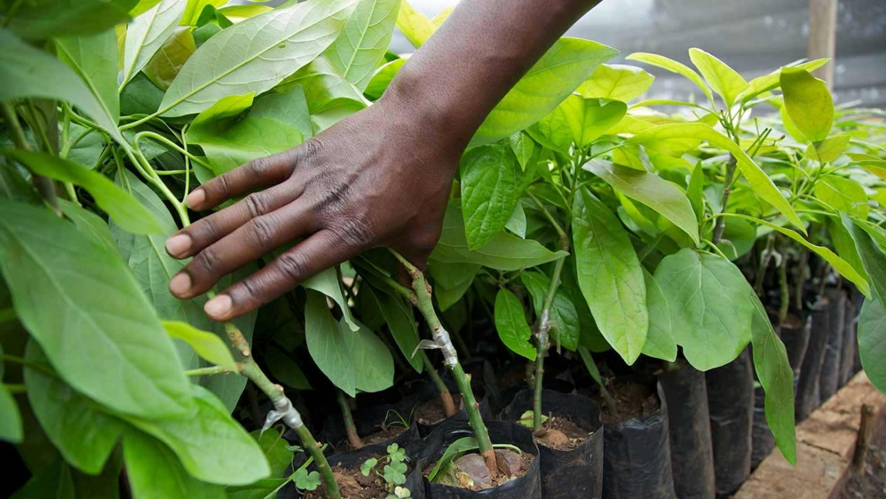 Venture Capital for African Agriculture