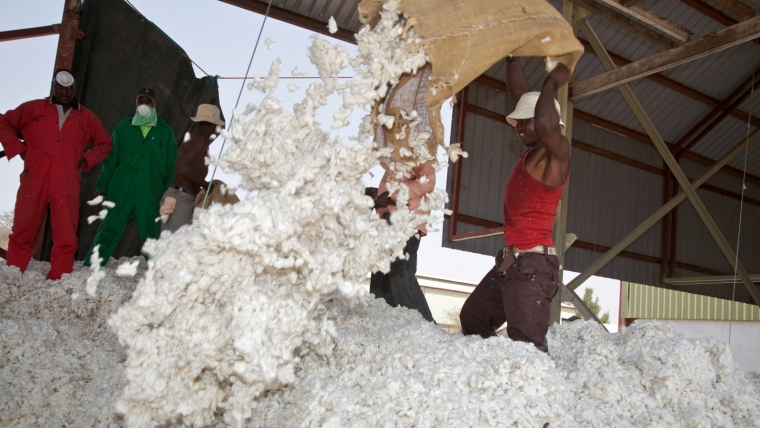 Tanzanian Cotton Sector